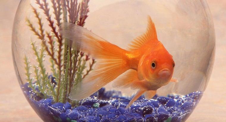 habitat-goldfish