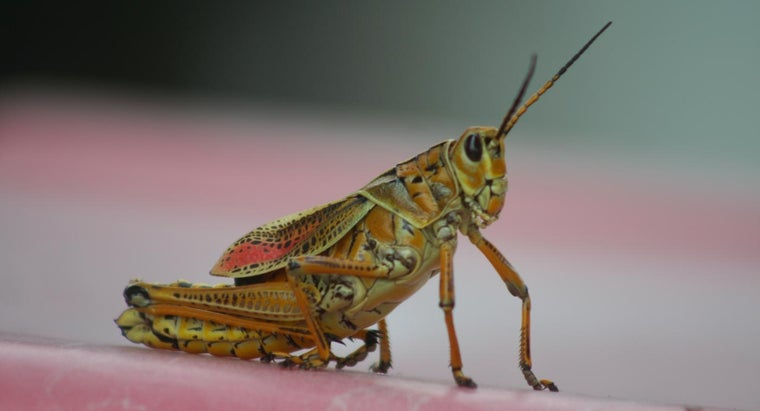 grasshoppers-eat-drink