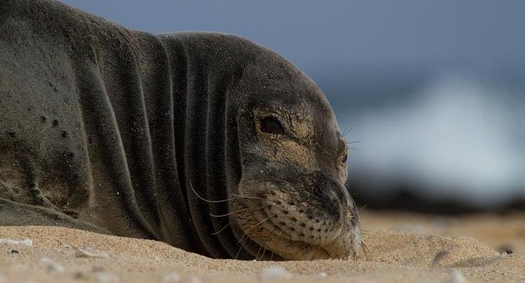 hawaii-s-state-animal