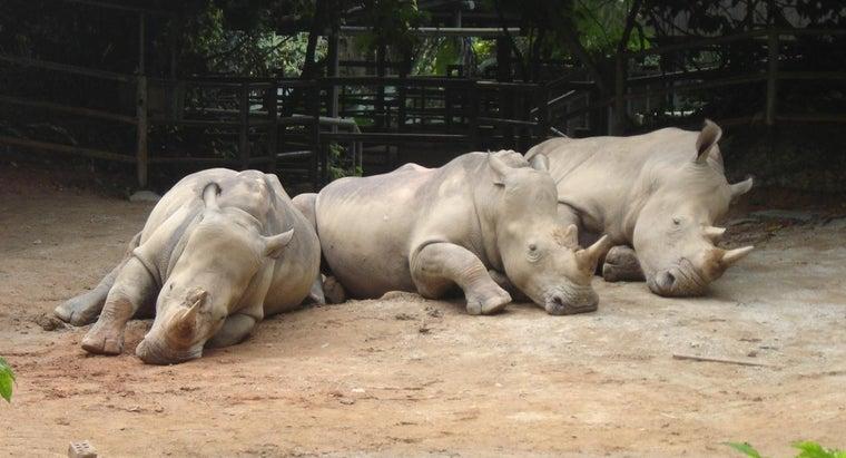 herd-rhinos-called