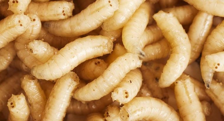 home-remedy-kill-maggots