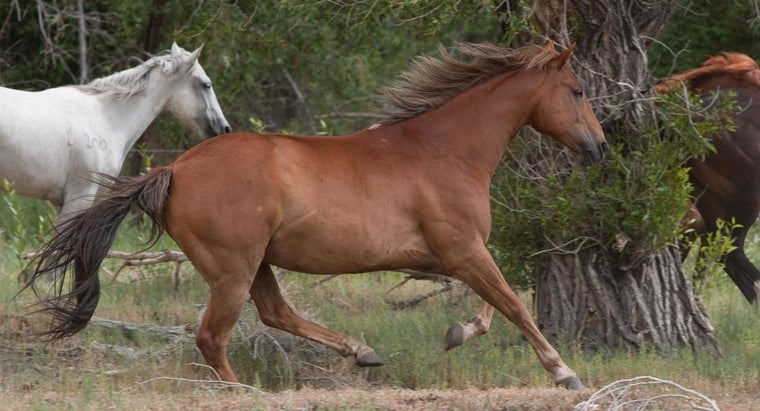 horse-s-habitat