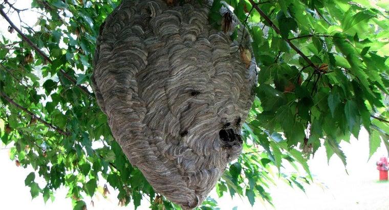 wasps-make-nests