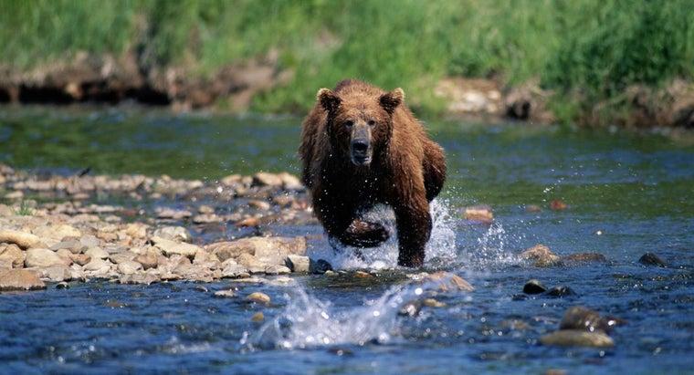 fast-can-bear-run