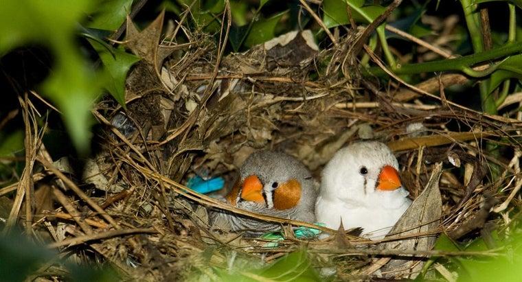 long-bird-leave-nest