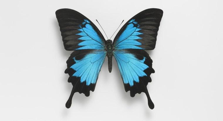 many-wings-butterfly