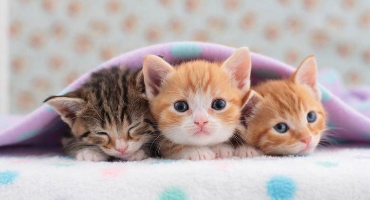 cat-ready-her-kittens