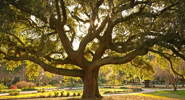 identify-oak-tree-types