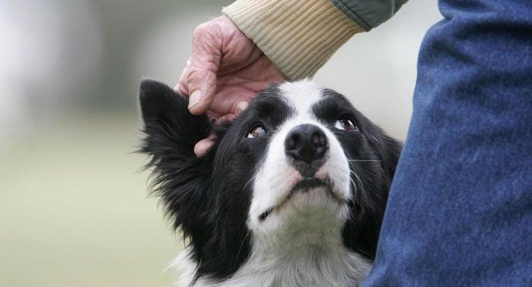 intelligent-dog-breeds-world