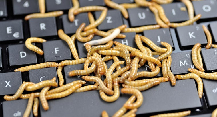 interesting-mealworms