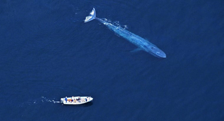 blue-whale-larger-dinosaur