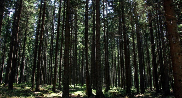 kinds-animals-live-forest