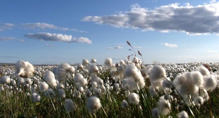 kinds-plants-grow-polar-regions