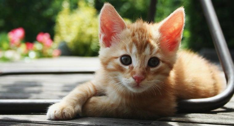 kitten-full-grown