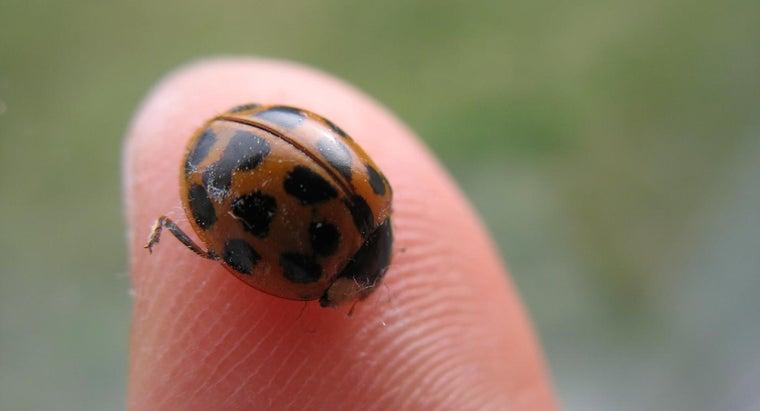 ladybugs-bite-people
