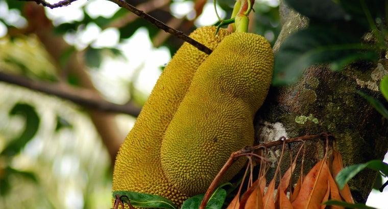 largest-fruit-world
