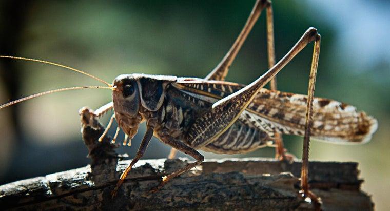 locusts-eat
