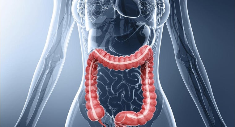 long-average-colon