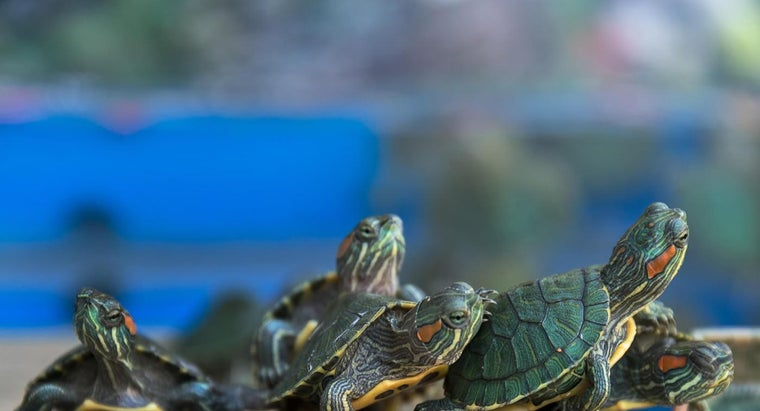 long-can-red-eared-sliders-stay-underwater