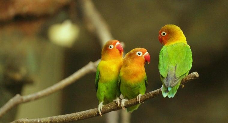 long-lovebird-egg-hatch