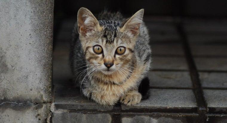 long-rigor-mortis-start-after-cat-passes
