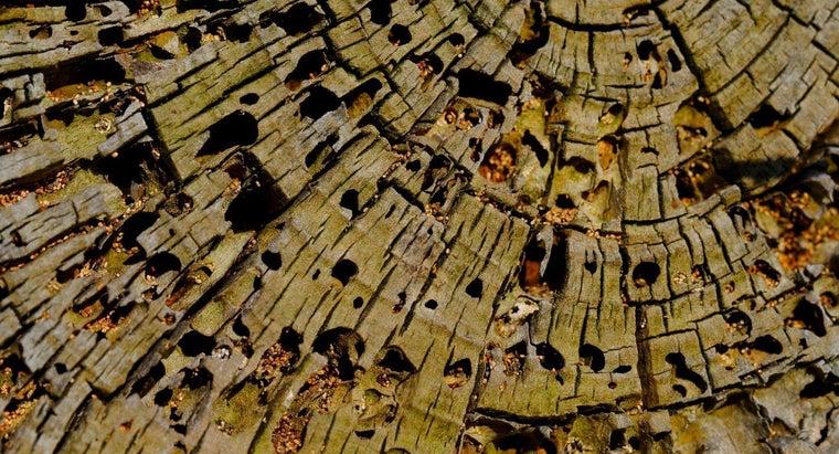 long-wood-rot