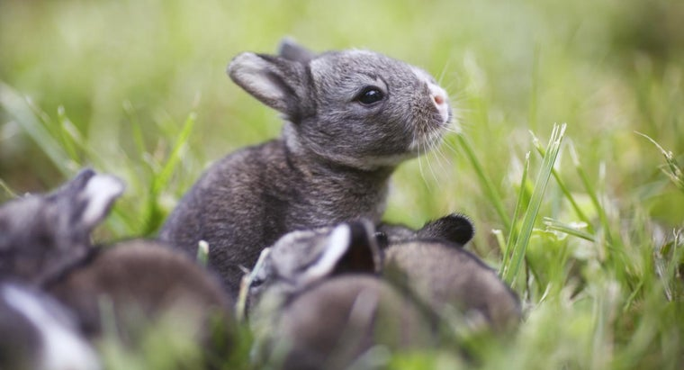 many-babies-rabbits-one-litter