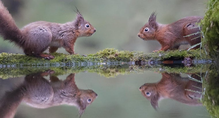 many-babies-squirrels