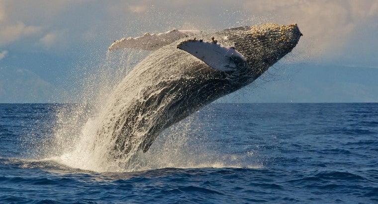 many-bones-whale