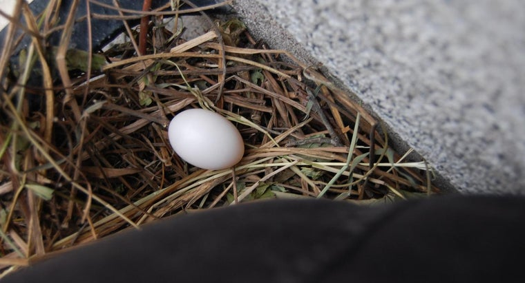 many-days-pigeon-eggs-hatch