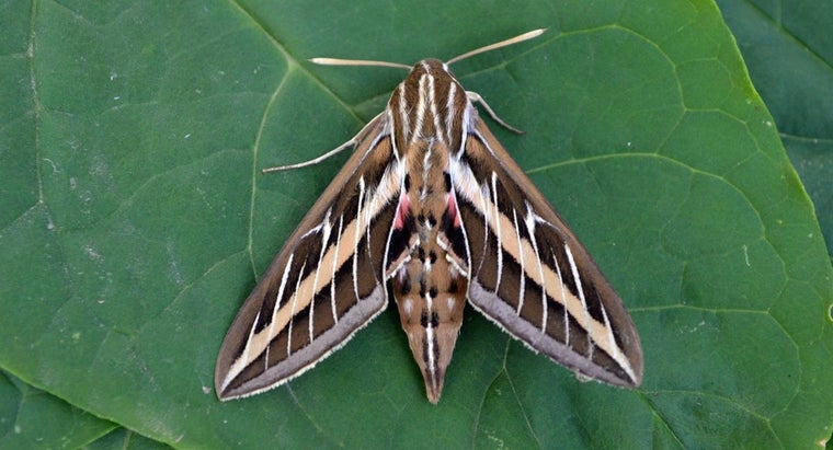 moths-bite-humans