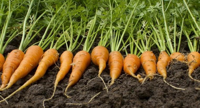 much-carrot-weigh