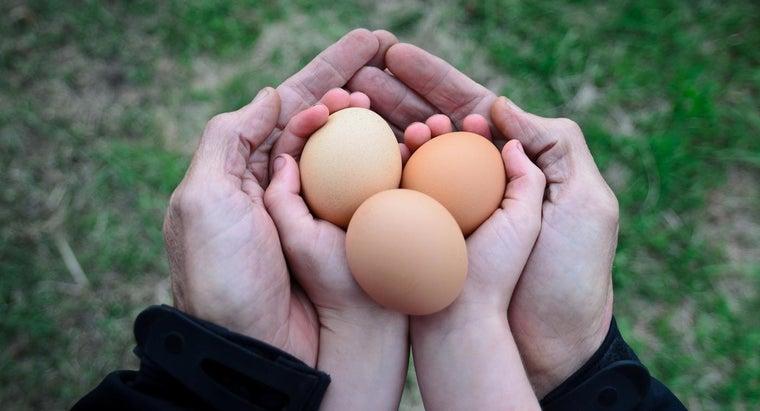 much-chicken-egg-weigh