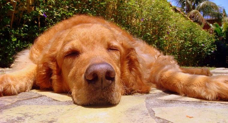 much-dramamine-can-give-dog