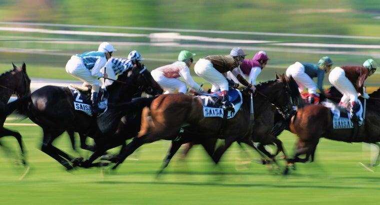 much-racehorse-weigh
