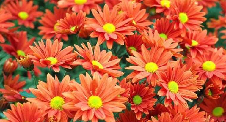 mums-annuals-perennials