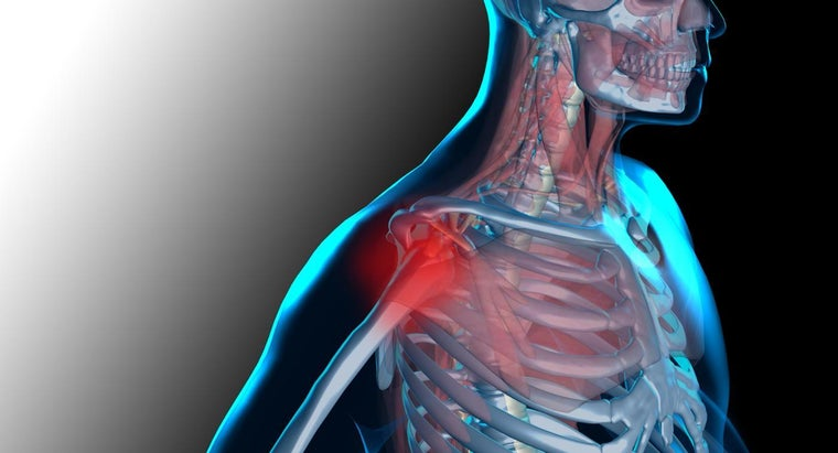 muscles-bones-work-together