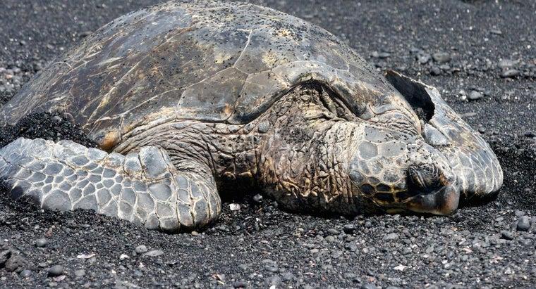 old-oldest-sea-turtle