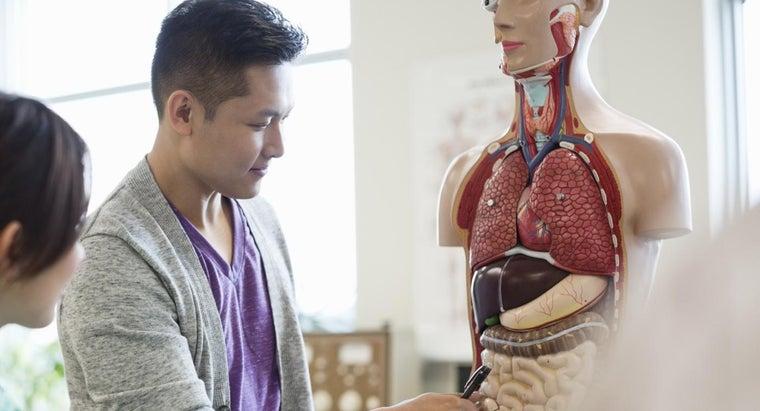 organs-right-side-body