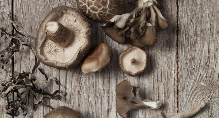 parts-mushroom