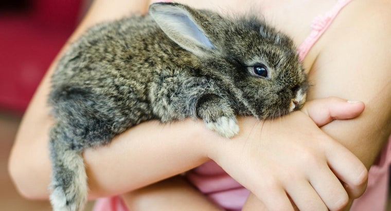 pet-stores-sell-bunnies