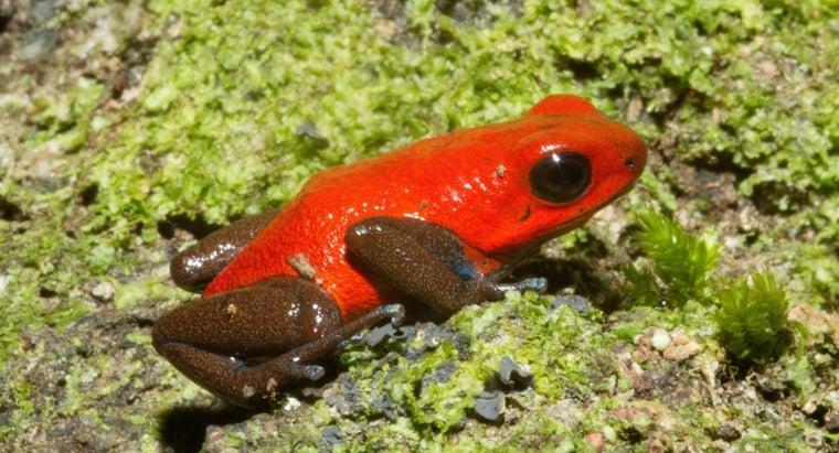 poison-dart-frogs-eat