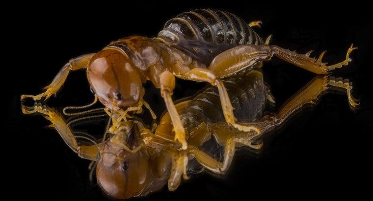 potato-bugs-eat