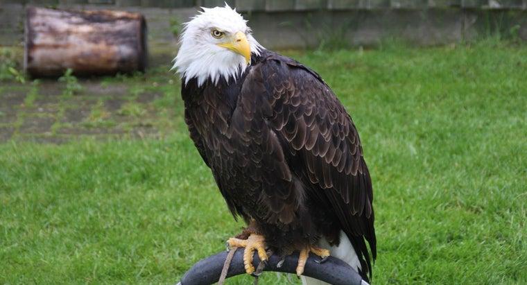 predators-bald-eagles