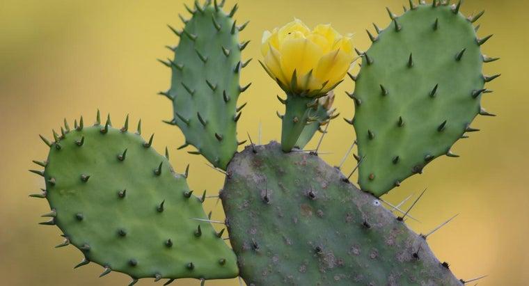 prickly-pear-cactus-adapted-desert-life