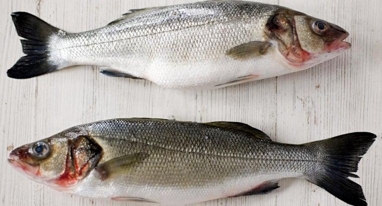 salmon-scales