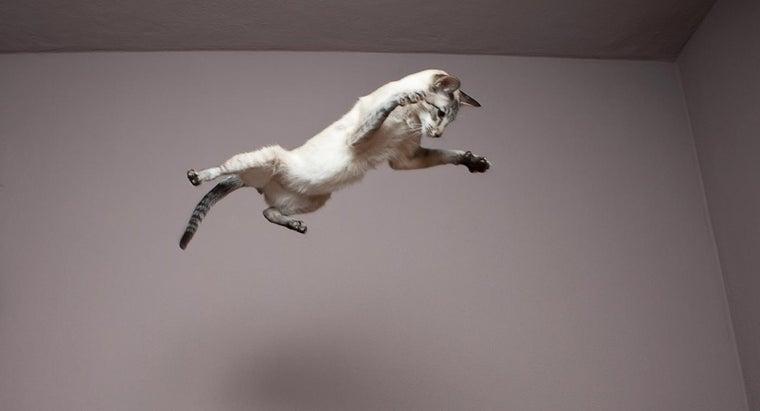 say-cat-nine-lives