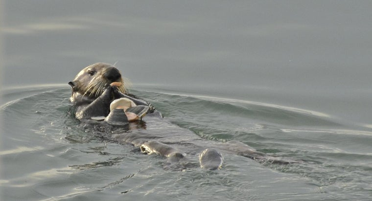sea-otters-endangered