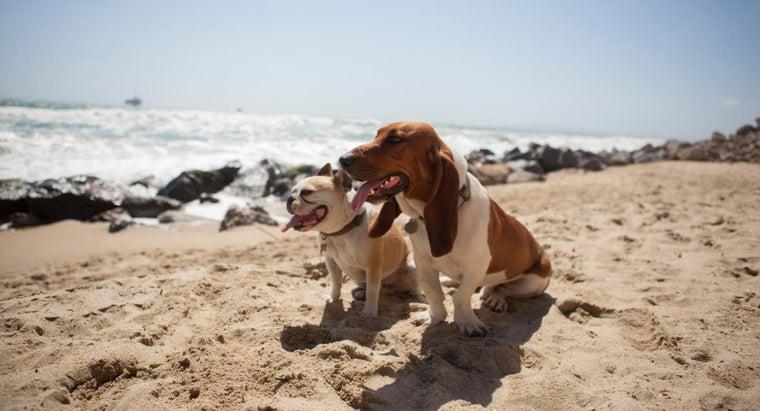 sire-dam-dogs