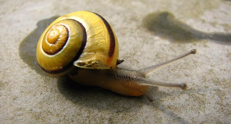 snails-insects
